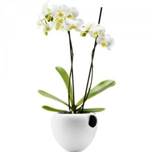 Self watering Orchid pot - 17cm